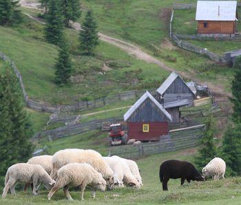 Vacanță rurală